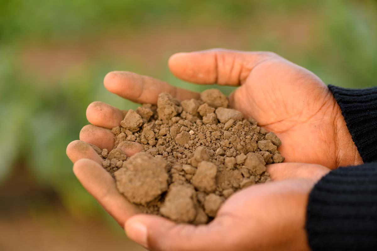 soil-adewale